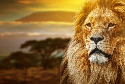 Tierwelt - Reisetipp Afrika