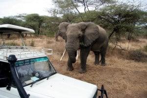 Gefahr durch Elefanten