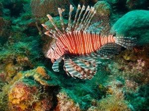 Gefährliche Meerestiere