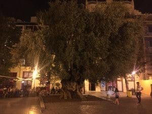 alter Olivenbaum Palma