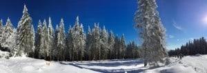 Winterwald mit blauen Himmel