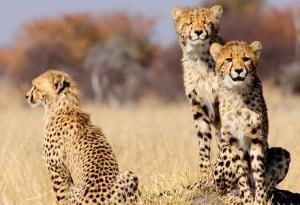 Tierwelt Südafrika