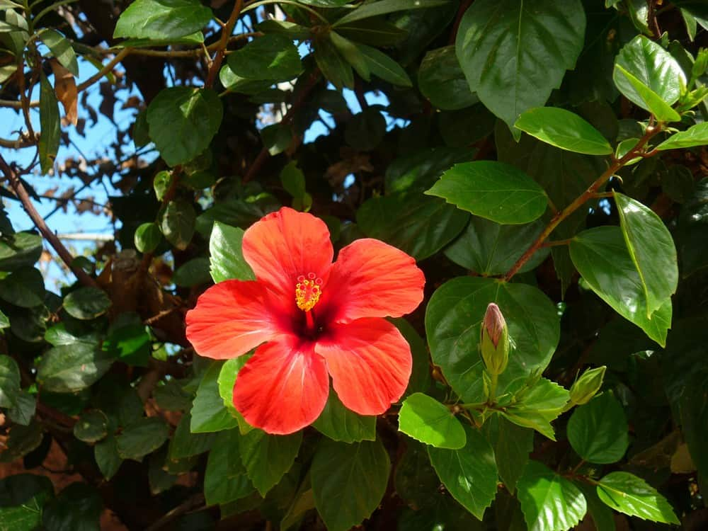 Reiseblogonline-tipps-zur-reisefotografie-hibiskus
