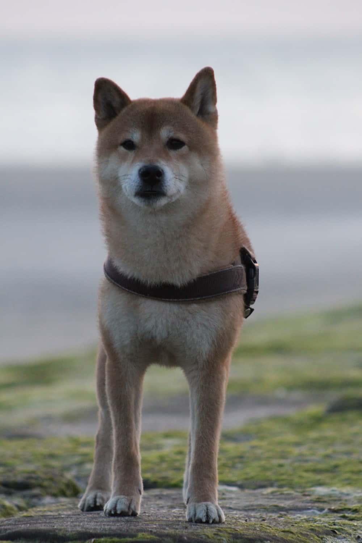 Reiseblogonline-tipps-zur-reisefotografie-mit-dem-eigenen-hund-am-strand