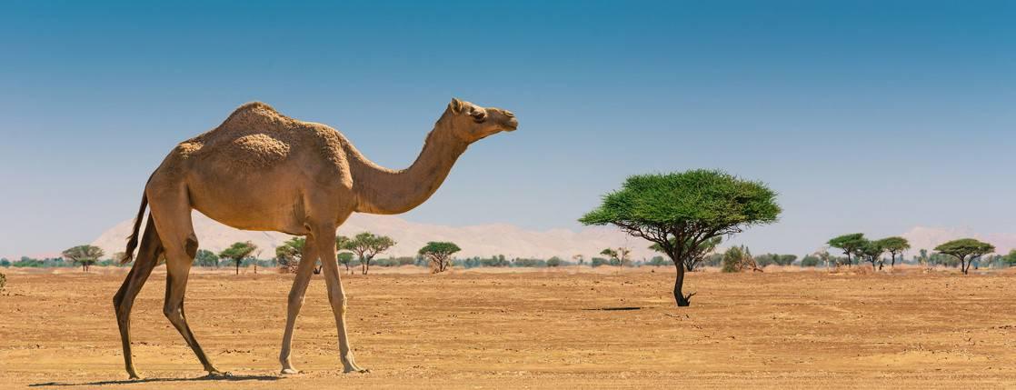 Reiseblogonline-Wuestensafari-Dubai