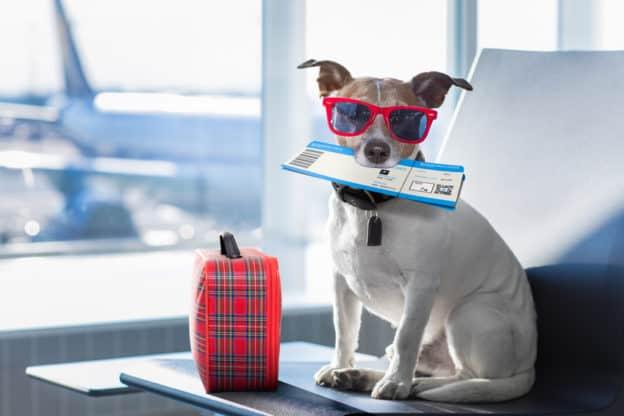 Reiseblog-Fliegen-mit-den-Hund