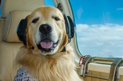 Reiseblog-Fliegen-mit-den-Hund_a