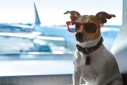 Reiseblog-Fliegen-mit-den-Hund_