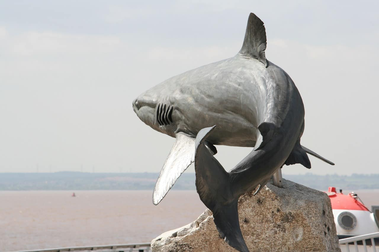 Die gefährlichsten Haie der Welt-grauer Riffhai